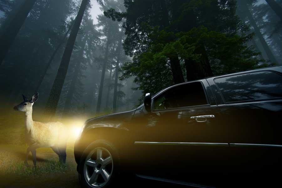 Driving Safely During Deer Season